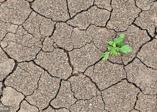 果园土壤为什么板结