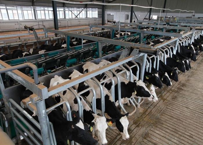 《关于加快畜牧业高质量发展的实施意见》解读: 推动畜牧业转型 持续提高畜牧业质量效益和核心竞争力